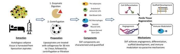 kök hücre tedavisi nedir